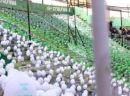 Le Pana proteste contre la fermeture d'une tribune avec des ballons