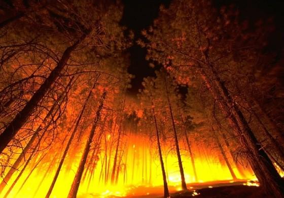 Des tifosi du Torino achètent des arbres pour réhabiliter le Vésuve